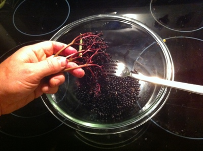 Wild Edibles: How to Make Elderberry Jelly