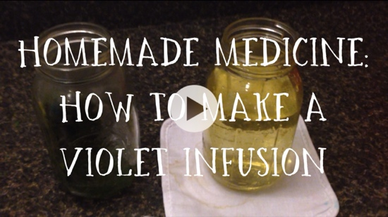 Homemade Medicine: How to Make a Violet Infusion