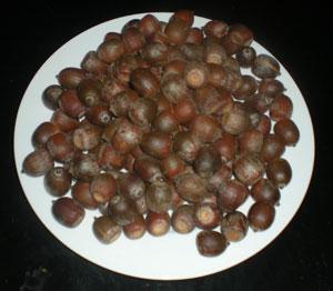 acorns-001