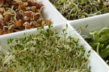 how to grow bean sprouts without roots